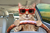 istock Portrait of a cat with sunglasses driving a car 1215945167