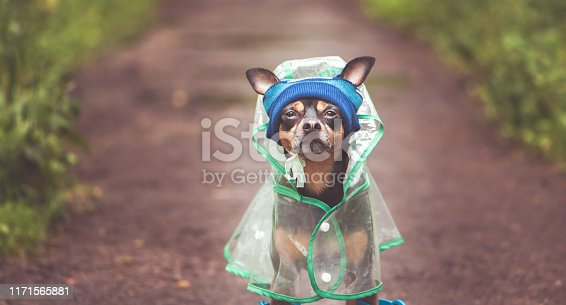 istock Portrait of a creative dog in a hat and a raincoat. Theme of autumn and rainy weather 1171565881