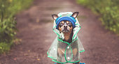 Portrait of a creative dog in a hat and a raincoat. Theme of autumn and rainy weather