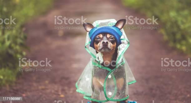 Portrait of a creative dog in a hat and a raincoat theme of autumn picture id1171565881?b=1&k=6&m=1171565881&s=612x612&h=yfsbuydjamgnwfxkjqghretihswnqkk vk9m80cpk2w=