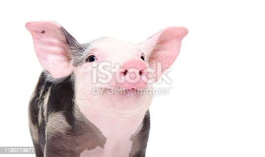 istock Portrait of a cute cheerful pig isolated on white background 1180219877