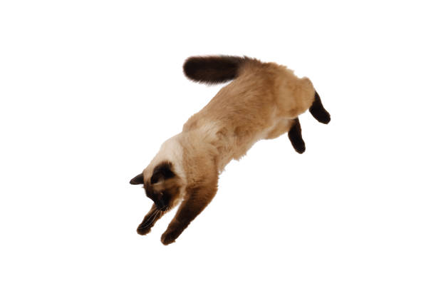 Portrait of a cute flying fluffy cat isolated white bsckground picture id928881760?b=1&k=6&m=928881760&s=612x612&w=0&h=7rwy2ix4pn8ldhhrlxvtibg7fkrsqiri me5hxn1x7s=