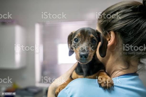 Portrait of a cute little dachshund carried by an unrecognizable at picture id918369146?b=1&k=6&m=918369146&s=612x612&h=5ea1sdcs z49axdnn94v6fq69krnn x4nhju0koj1lg=