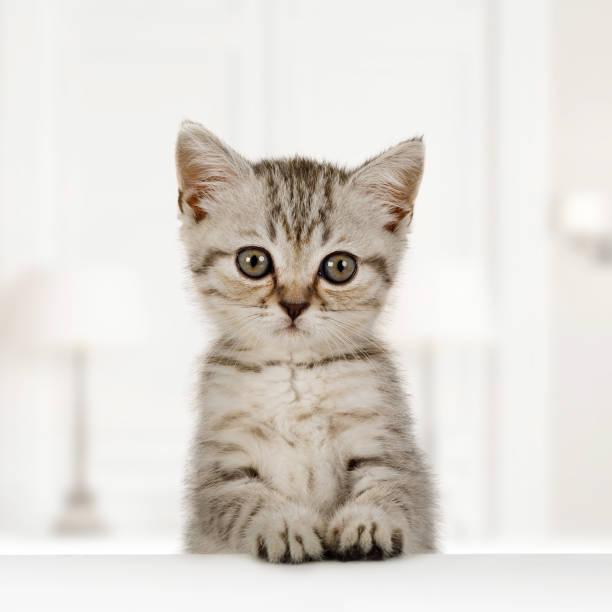 Porträt eines niedlichen kleinen flauschigen Kätzchens – Foto
