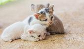 Portrait of a cute little kitten.