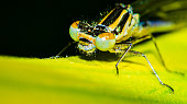 The animal is colored black and yellow and has small hairs all over the body.