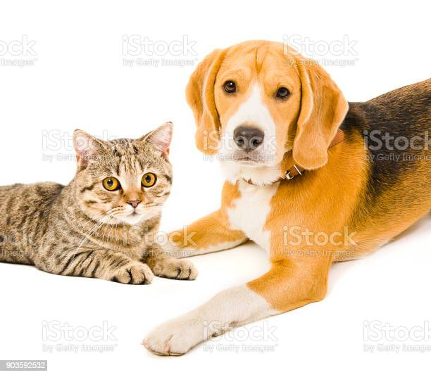 Portrait of a dog and a cat lying together picture id903592532?b=1&k=6&m=903592532&s=612x612&h=gjvuabal0sivevepepubgsuk2hhp 9iyk143p9c8j98=