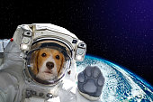 Portrait of a dog astronaut in space on background of the globe. Elements of this image furnished by NASA
