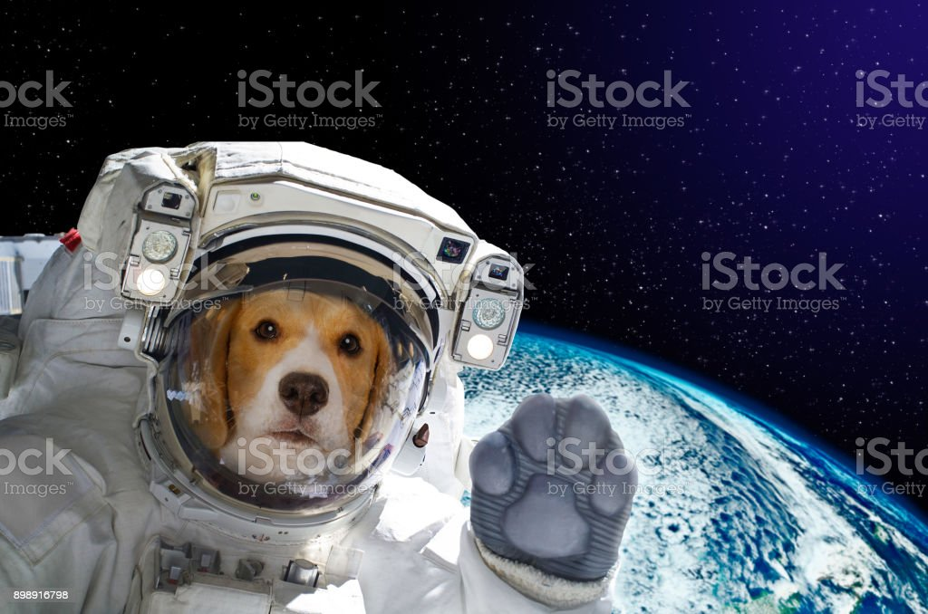 Portrait of a dog astronaut in space on background of the globe. Elements of this image furnished by NASA stock photo