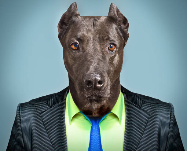 Portrait of a dog in a business suit picture id910314088?b=1&k=6&m=910314088&s=612x612&w=0&h=csa11ob3dkg1urjofr1 pwusblkuqjj 4wsynwdg8oy=