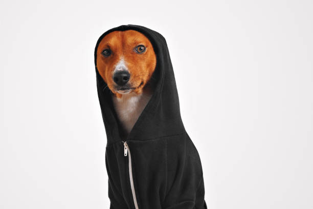 Portrait of a dog in black zippered hoodie stock photo