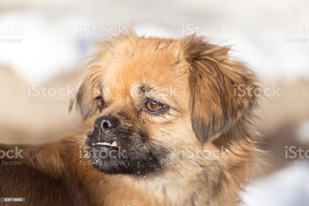 Portrait of a dog on the nature stock photo