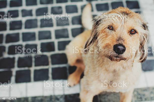 Portrait of a dog on the street picture id481162474?b=1&k=6&m=481162474&s=612x612&h= gpqyx eacuwnkdrodeqezl3 dxqj3bc35kdrjqrntq=