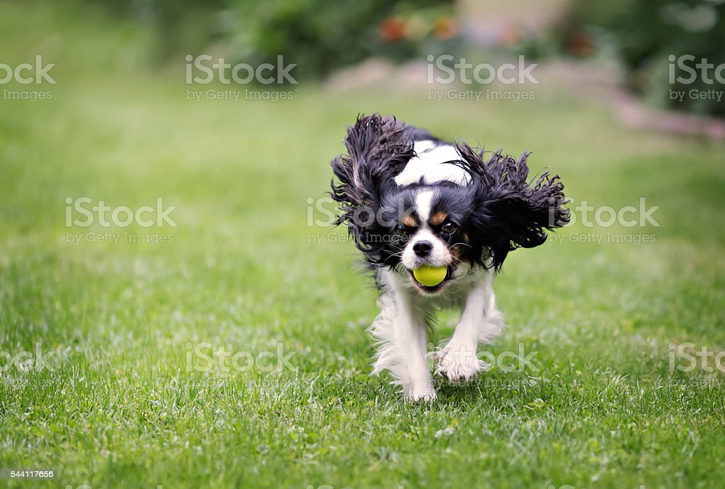 portrait of a dog stock photo