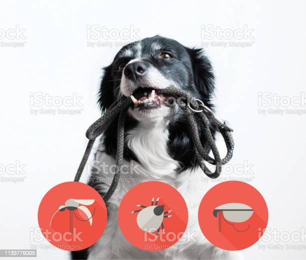 Portrait of a dog with icons of parazites around its head black and picture id1133776005?b=1&k=6&m=1133776005&s=612x612&h=r8tbm4gghnczcc5mdf8rcyqacd6f1zjy0oz2hd52thk=
