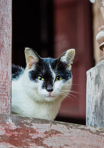 Portrait of a domestic cat picture id468658802?b=1&k=6&m=468658802&s=612x612&w=0&h=i5sxsl3ybs9hfnujsosfrbynqm7tkwuoilpt2daon6k=