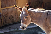 Portrait of a donkey during a trip to the zoo of Pistoia, Italy
