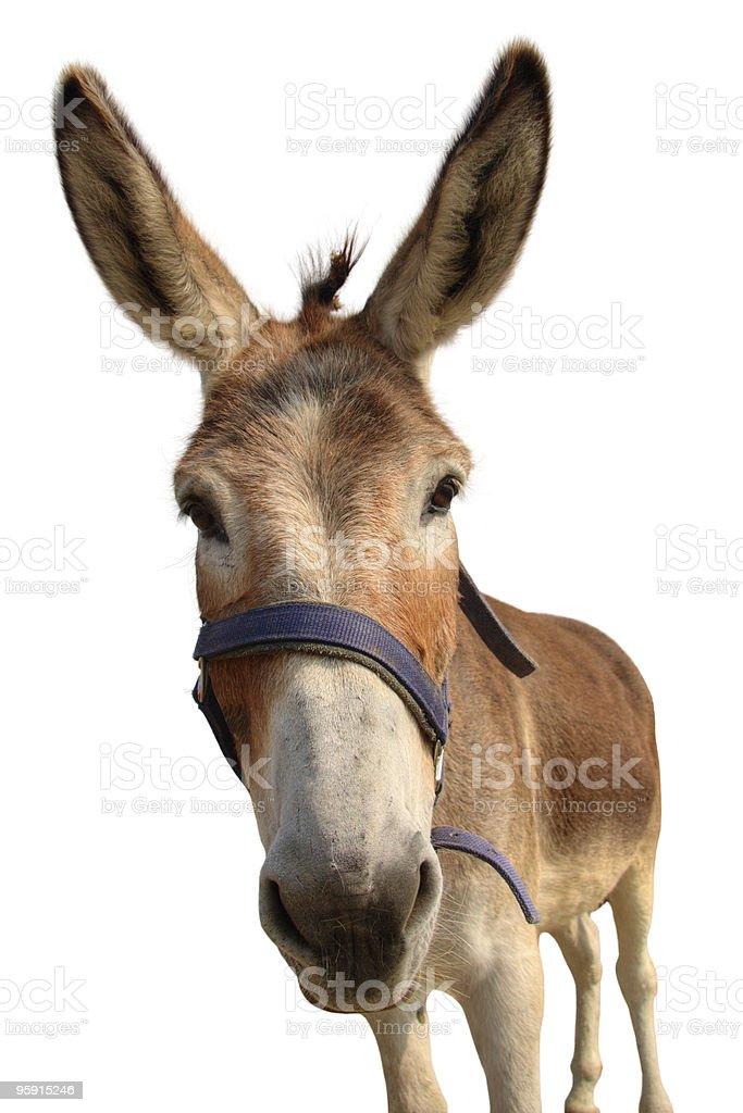 Portrait of a donkey stock photo