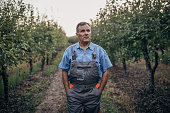 Portrait of a farmer in an apple orchard