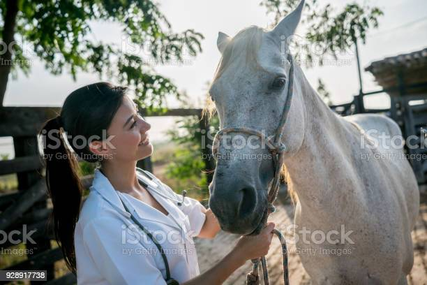Portrait of a female veterinarian examining a horse picture id928917738?b=1&k=6&m=928917738&s=612x612&h=lcjcvaopof4decorxxfdfexgc1kolgmiwzi8ci56lto=