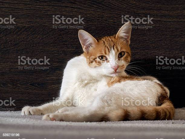 Portrait of a frightened or angry cat picture id539219196?b=1&k=6&m=539219196&s=612x612&h=xkohjfa9rbekzqx9153sskzdswyazp5ufmvssx6puhi=