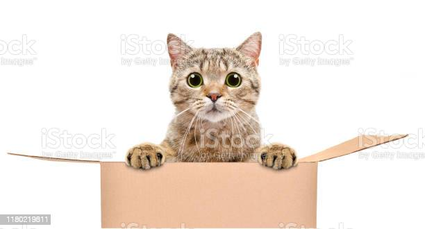Portrait of a funny cat looking out of the box isolated on white picture id1180219811?b=1&k=6&m=1180219811&s=612x612&h=8nwoggfr2rsyzl0 k4a9vmm2 tj08glgxtfeveh1u4u=