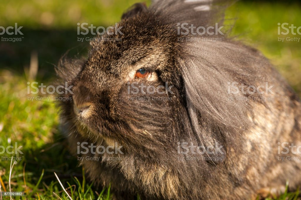 Portrait of a funny hairy rabbit stock photo