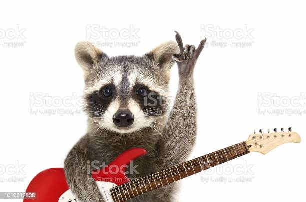 Portrait of a funny raccoon with electric guitar showing a rock picture id1010812838?b=1&k=6&m=1010812838&s=612x612&h=klyz4wukomu5bes4cfnhwrbja88y87a4lmjsmqv6qnq=