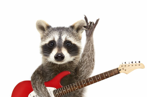 portrait of a funny raccoon with electric guitar, showing a rock gesture - soggetti con animali foto e immagini stock