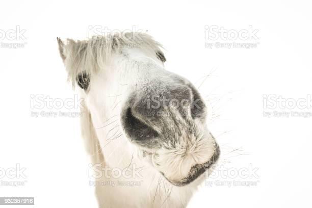 Portrait of a funny white horse picture id932357916?b=1&k=6&m=932357916&s=612x612&h=es1et2klprdngw5hl2fnpm66nqvirxqwqtcy4q8pmls=