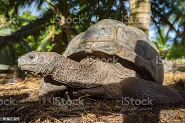 Portrait of a giant tortoise 3 picture id861071646?b=1&k=6&m=861071646&s=612x612&h=got9mk9mr7dvxcir omgai1ad82jpn4erdbtio4org0=