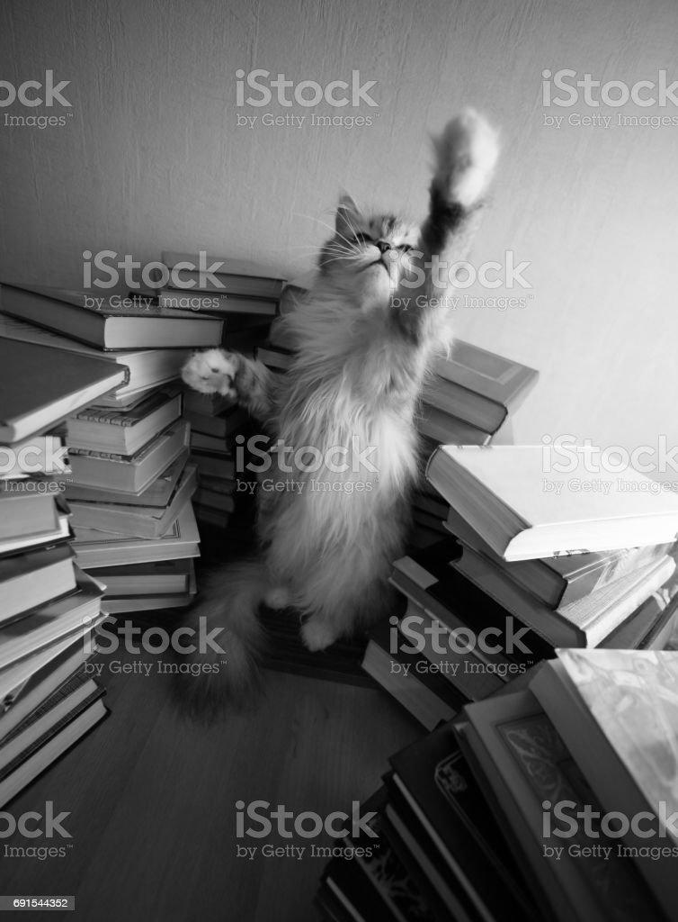 Portrait of a grey cat stock photo