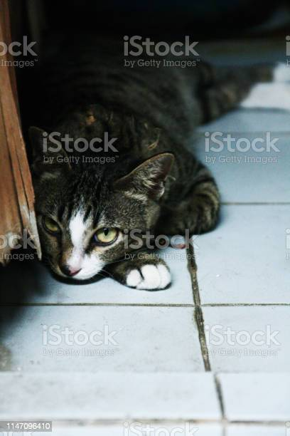 Portrait of a grey striped cat sleeping on the floor picture id1147096410?b=1&k=6&m=1147096410&s=612x612&h=bfmxzj om4dxsddb7hhu3scfnnil61bjgua269nlaew=