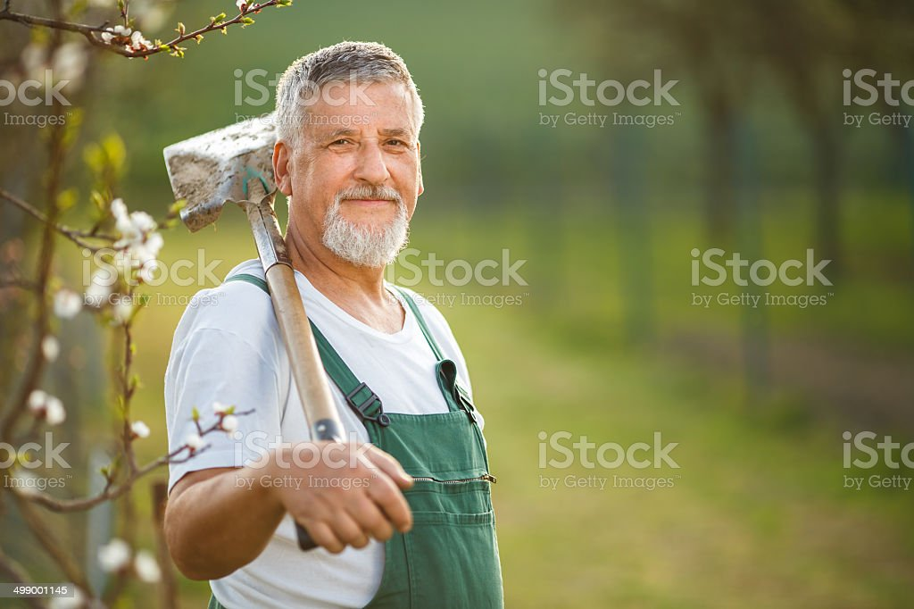 Portrait of a handsome senior man gardening stock photo