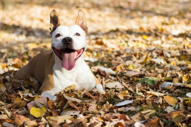 Portrait of a happy dog stock photo