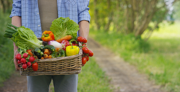 Portrait of a happy young farmer holding fresh vegetables in a basket.