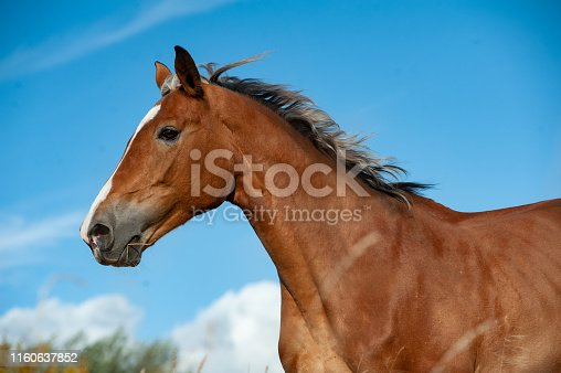 Portrait of a horse in movement against the blue skies
