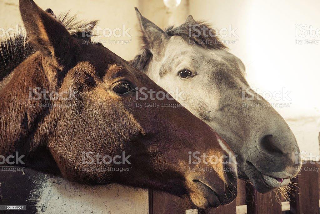 Portrait of a horse stock photo