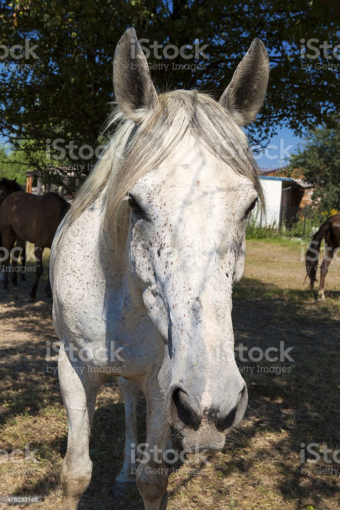 Portrait of a horse royalty-free stock photo