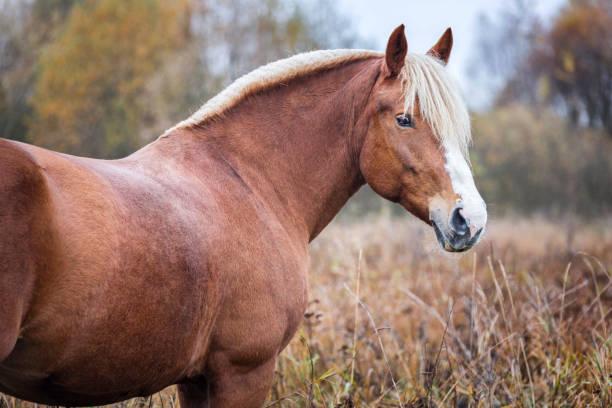 Portrait of a horse picture id902790106?b=1&k=6&m=902790106&s=612x612&w=0&h=ow0p6dxgohq5bgi3iekyz6wtj6qmwyni1trjuuvazuu=