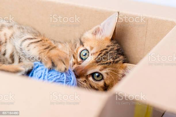 Portrait of a kitten with a ball from the box picture id637164480?b=1&k=6&m=637164480&s=612x612&h=sxlmjkxbmpa hq6nzzalrttlyk06w0mnfk859gfutjm=