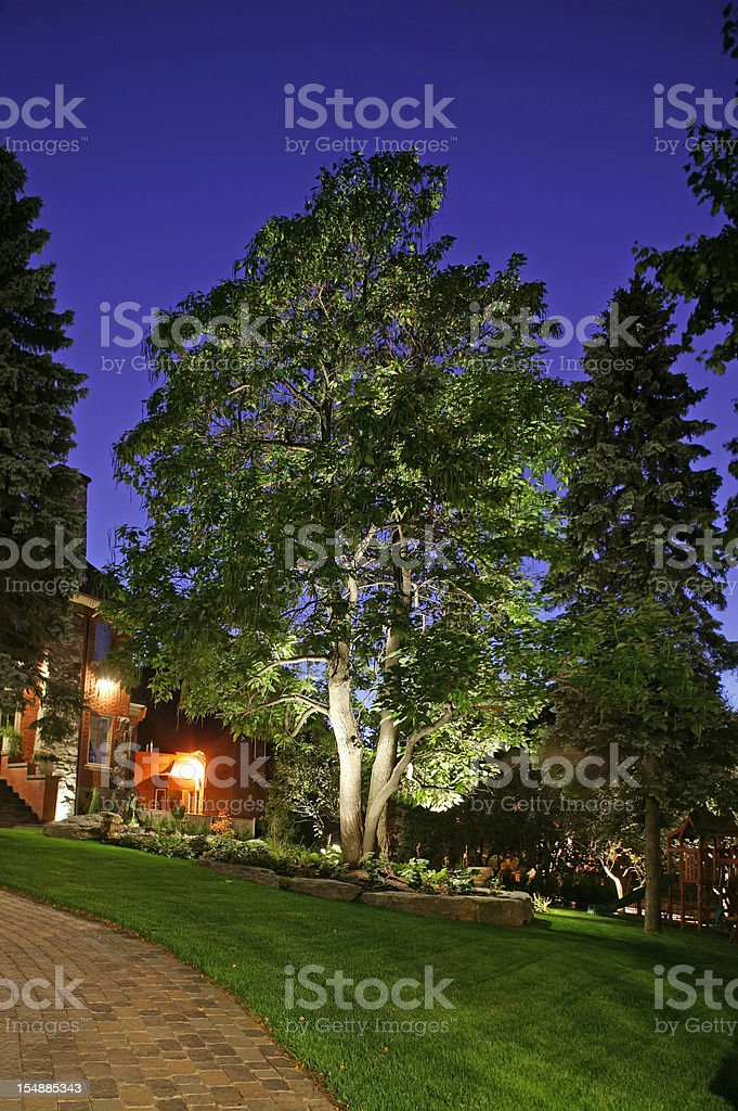 Portrait of a large tree on a manicured lawn at night stock photo