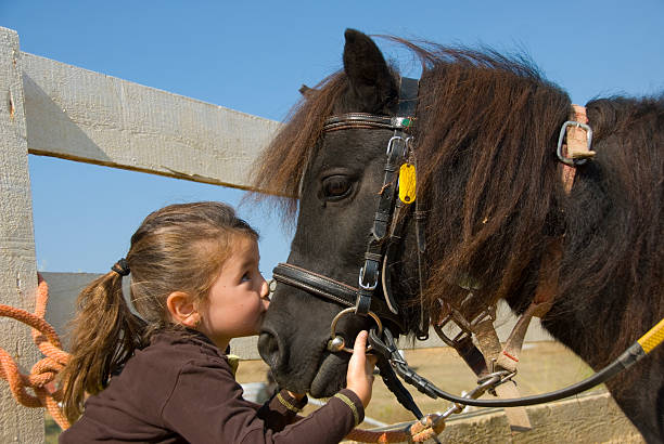 Portrait of a little girl kissing a black horse little girl kissing her pony purebred shetland on the nose pony stock pictures, royalty-free photos & images