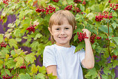 Portrait of a little girl on the background of a bush with bunches of red berries. Golden autumn harvesting