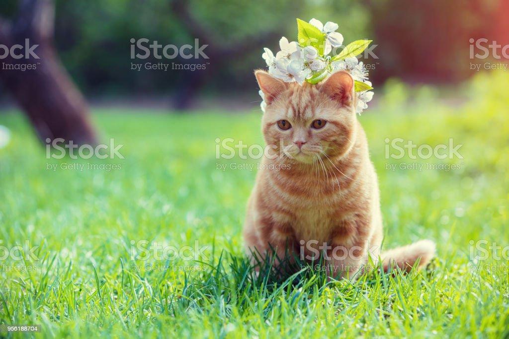 Porträt von einem kleinen roten Kätzchen mit Kirsche Blumen auf dem Kopf. Katze sitzt auf dem Rasen im Garten – Foto