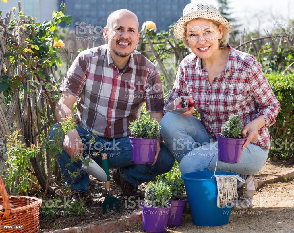 一對恩愛的夫妻,照顧的綠色的植物在花園裡的肖像 免版稅 stock photo