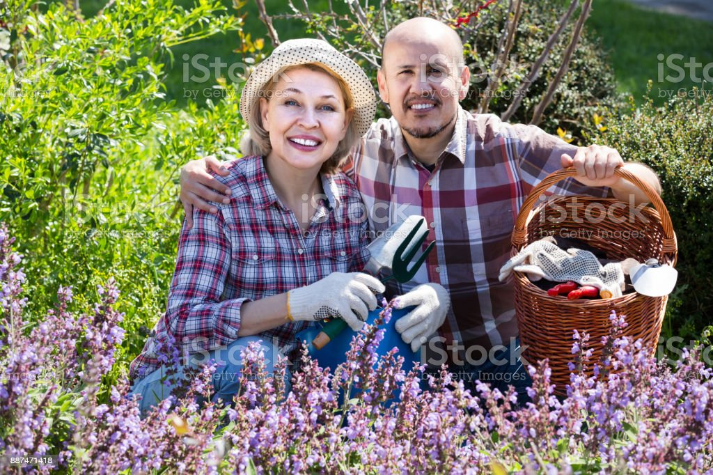 portrait of a lovely senior couple taking care of green plants in the garden stock photo