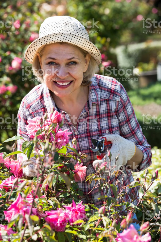 portrait of a lovely  senior woman taking care of roses in the garden stock photo