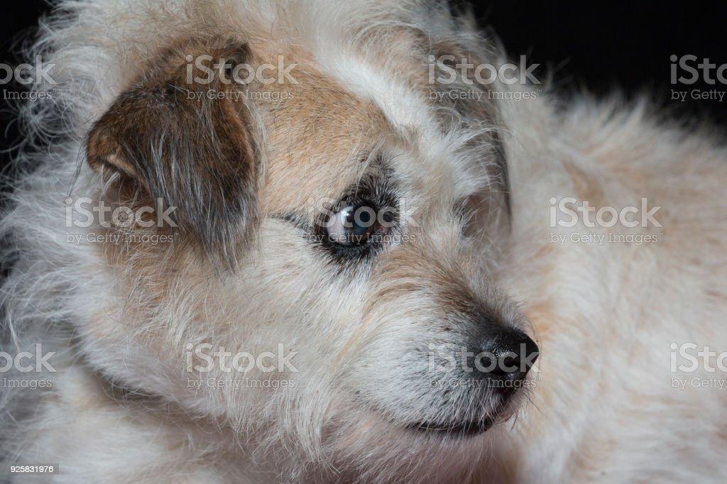 Portrait of a mixed breed dog i stock photo