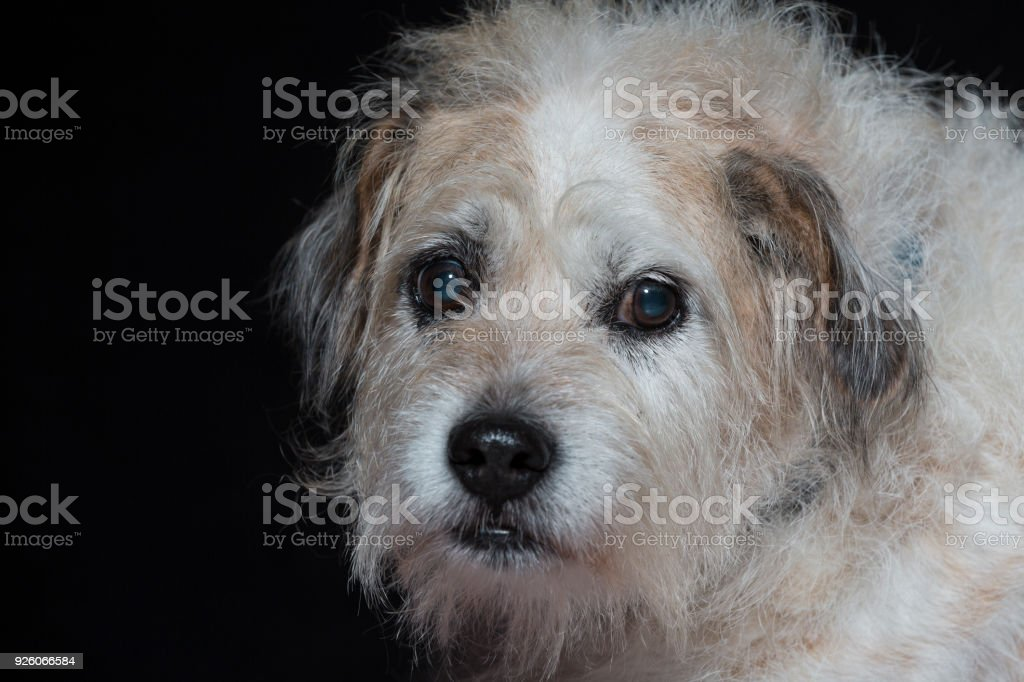 Portrait of a mixed breed dog stock photo